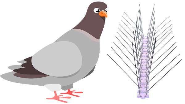 acheter pic anti pigeon