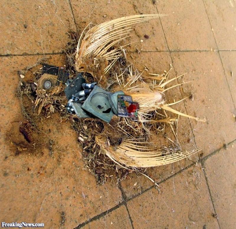 anti pigeon devices