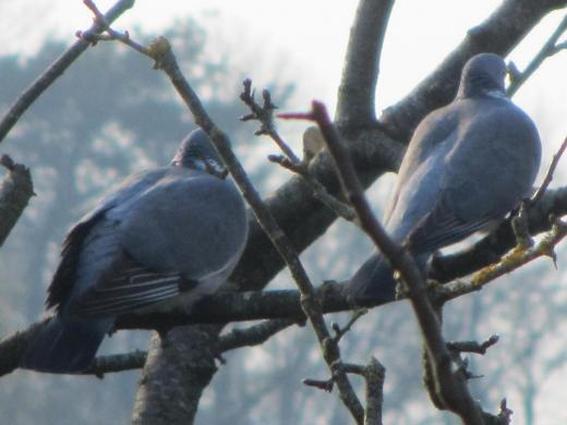anti pigeon gamm vert