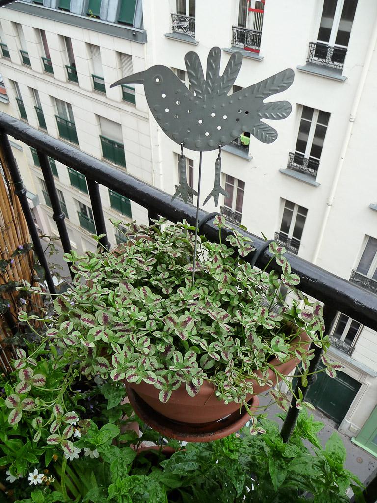 anti pigeon jardiniere