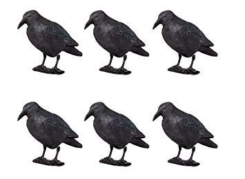anti pigeon mp3