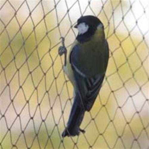 anti pigeon net india
