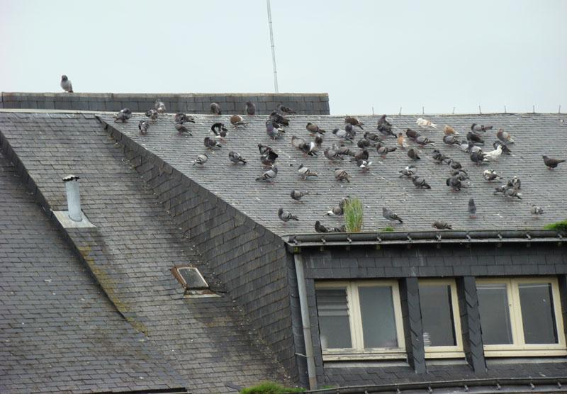 anti pigeon pour antenne