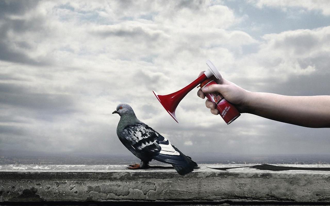 anti pigeon spray