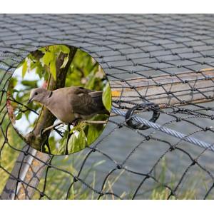 anti pigeon strasbourg