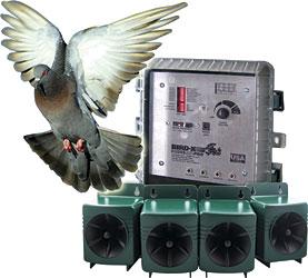 effaroucheur sonore pigeon