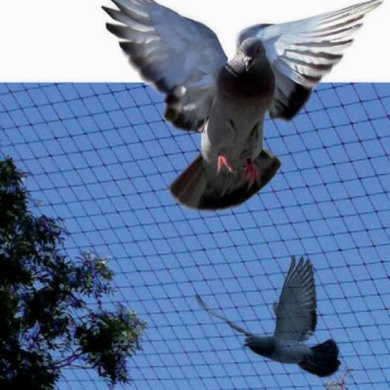 fabricant pic anti pigeon