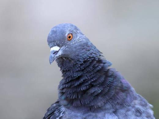 filet anti pigeon truffaut