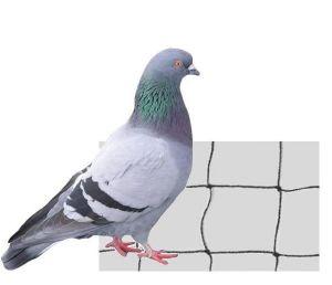 filet anti pigeon
