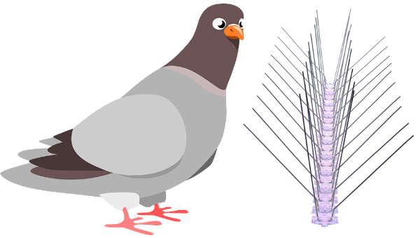 installation pic anti pigeon