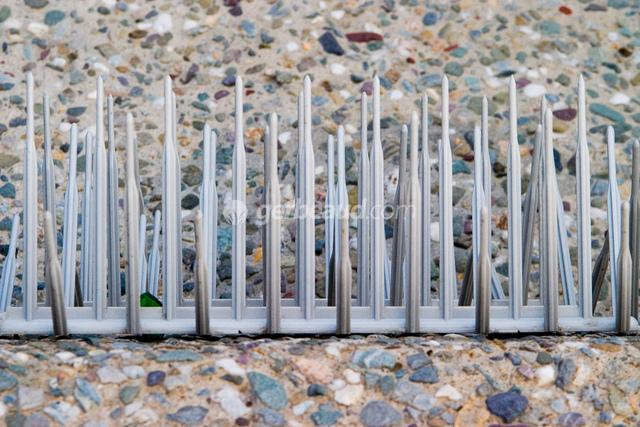 pic metallique anti pigeon