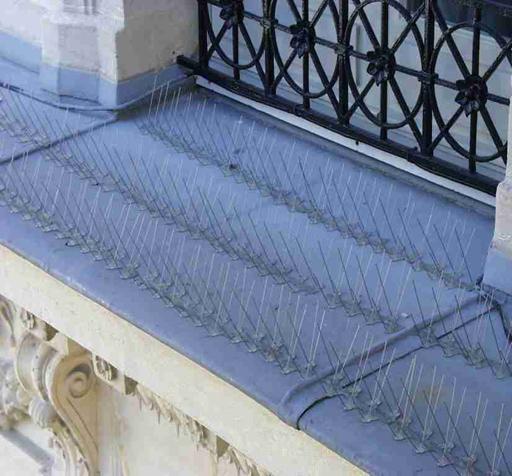 pics anti pigeons plastique