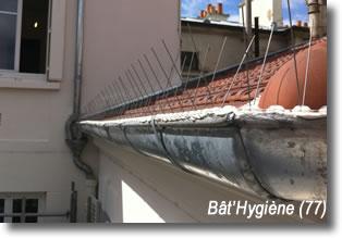 pics anti pigeons toiture