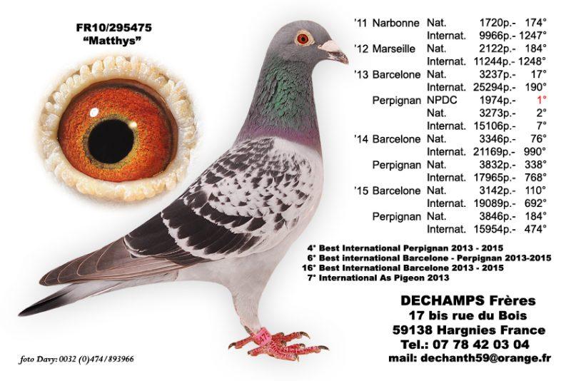piege a pigeon en 7 lettres
