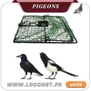piege filet pour pigeon