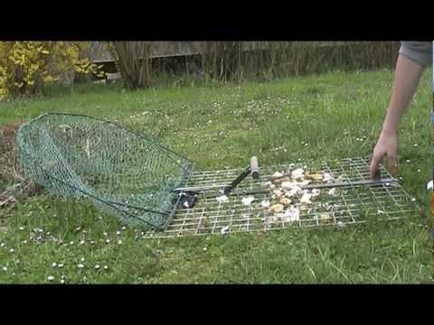 piege pigeon fabriquer