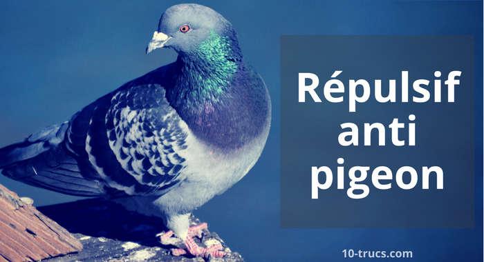 repulsif pigeon fait maison