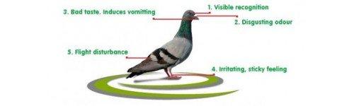 repulsif pigeon pour toiture