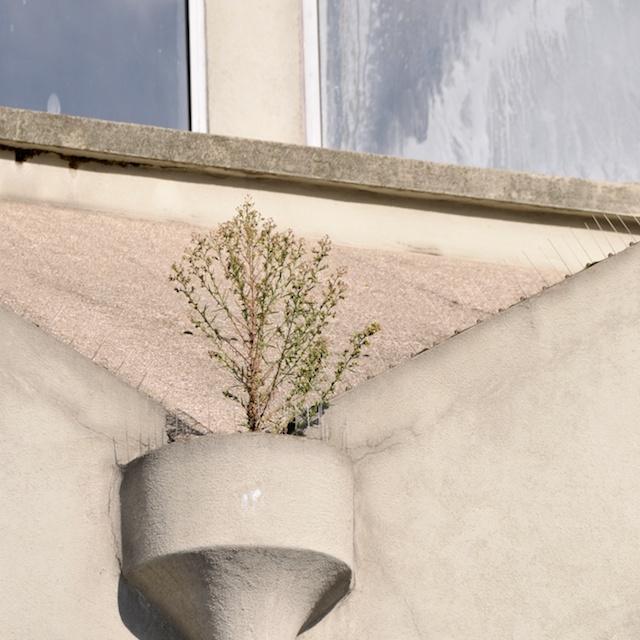 anti pigeon arbre