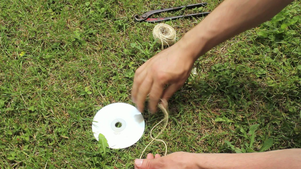 anti pigeon cd