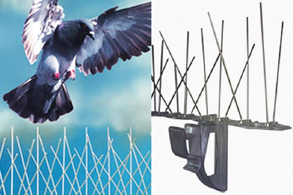 anti pigeon lyon