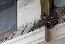 anti pigeon paris