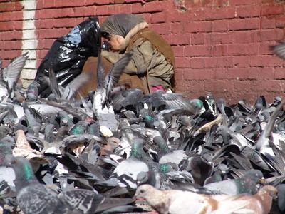 effaroucheur pour pigeon