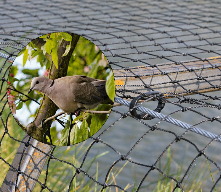 filet anti pigeon avis