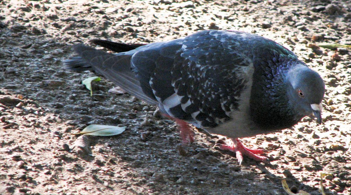 fournisseur pic anti pigeon