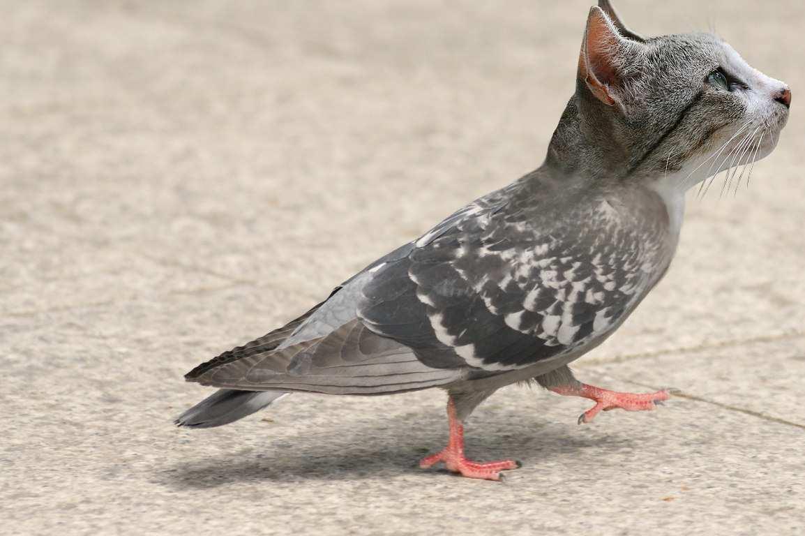 pic anti pigeon pour chat