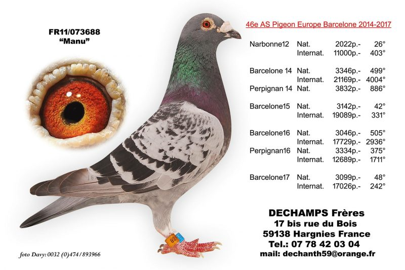 piege a pigeons synonyme