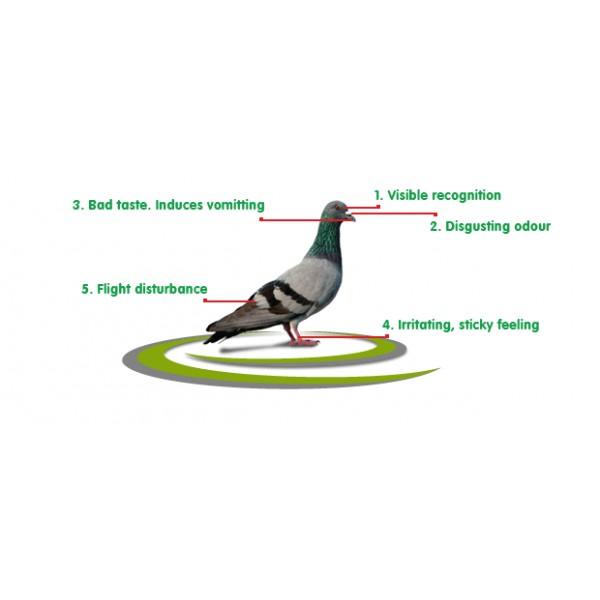 repulsif pigeon gel